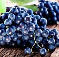 Как сделать вино из чёрного винограда в домашних условиях: простые рецепты приготовления, лучшие сорта