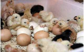 Инкубатор «Идеальная наседка» на 63, 90, 104 яйца: инструкция по применению, температура
