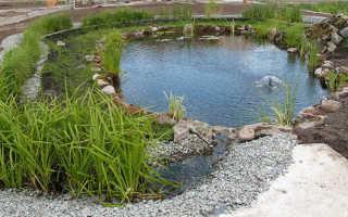 Устройство биоплато для пруда: как сделать своими руками, с насосом и без него, растения для биоплато, очистка дачного водоёма с биоплато