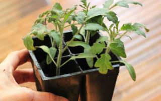 Почему помидоры в теплице не растут или растут плохо: причины, что делать и чем подкормить, полезные советы