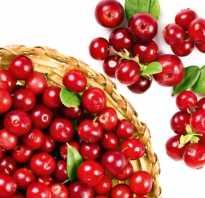 Является ли клюква аллергеном: химический состав ягод, симптомы аллергической реакции у взрослых и детей