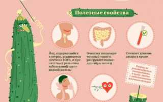 Огурцы для женщин: польза и вред, противопоказания, калорийность, правила употребления и хранения