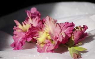 Когда зацветают гладиолусы после посадки, как долго цветут и сколько раз за сезон, как продлить или задержать цветение