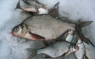 Отличия подлещика и леща: в чём разница и как отличить, это разные рыбы или нет, чем отличается самец от самки, как выглядят с фото, размеры