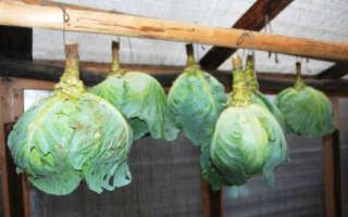 Хранение капусты в пищевой плёнке: лучшие сорта, подготовка, способы и условия хранения