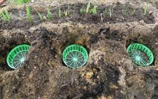 Посадка тюльпанов в корзины, ящики и контейнеры для луковичных: как правильно сажать цветок осенью в открытый грунт
