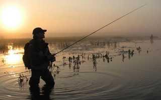 Карась в пруду в апреле: ловля рыбы на фидер и удочку, где лучше ловить, выбор прикормки и приманки