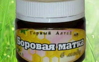 Мёд Боровая матка: лечебные свойства и противопоказания, как принимать, химический состав и калорийность