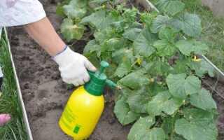 Подкормка огурцов калием в домашних условиях: виды и особенности применения во время плодоношения, сроки внесения подкормок