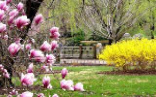 Какие заморозки выдерживает смородина весной: при какой температуре замерзает и как защитить растение от холодов