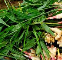 Можно ли вырастить имбирь в теплице: подходящие сорта, пошаговая инструкция по выращиванию в теплице