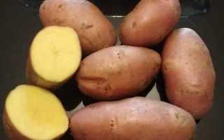 Картофель Эволюшн: характеристика и описание селекции, способы выращивания и охват урожайности, фото