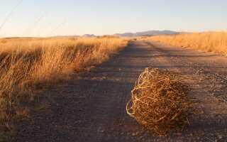 Хвост коровы: зачем нужен, почему поднимает, что делать, если сломали