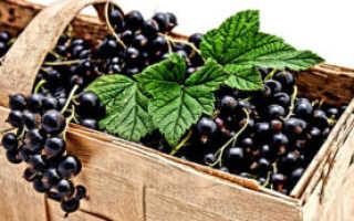 Рентабельность выращивания чёрной и красной смородины как бизнеса: финансовая и юридическая стороны