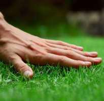 Удобрение для газона: чем подкормить и удобрить газонную траву летом, осенью и весной, лучшая жидкая подкормка, как часто и когда нужно удобрять