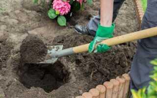 Почва для гортензии: какую она любит, как правильно подготовить грунт, в какую землю сажать, состав торфа, что нужно добавлять при посадке