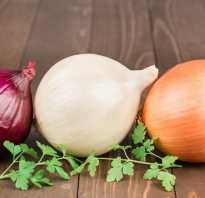 Какой лук полезнее — красный или белый? В чём отличия, какой лучше, польза и вред