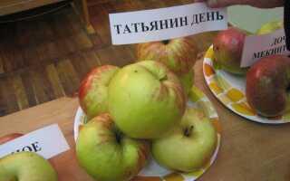 Яблоня Татьяна: описание сорта и характеристика, особенности посадки и ухода, фото