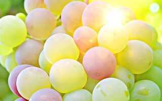 Самые вкусные сорта винограда: выбор по цвету и сроку созревания, какие сорта самые неприхотливые, видео