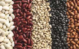 Чёрная фасоль: польза и вред, химический состав, особенности употребления и противопоказания