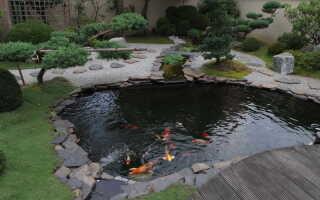 Пруд на даче для разведения рыбы и купания: как сделать своими руками, его размеры и фото