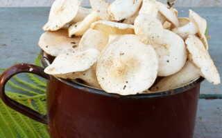 Как солить грибы рядовки (рядовка тополиная) на зиму: рецепт горячим и холодным способом