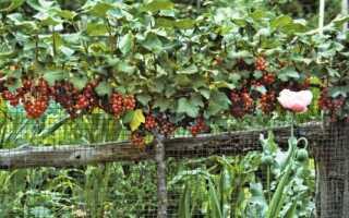 Когда лучше сажать кусты смородины и крыжовника: сезонные особенности, преимущества совместной посадки