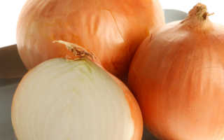 Лук сорта Олина: характеристика и описание сорта, выращивание и уход, фото