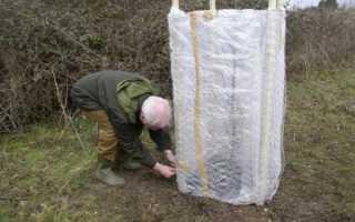 Утепление персика на зиму: особенности ухода при подготовке к зиме, как спасти от вымерзания, порядок работ