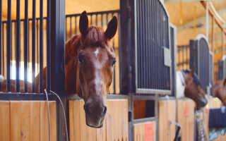 Конюшня для лошадей своими руками: как сделать, чертежи и размеры, фото