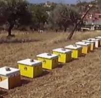 Пчёлы осенью: как обработать, подкормка, почему покидают улей и как это предотвратить, видео