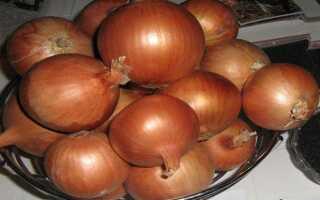 Лук Халцедон: описание и характеристика сорта, особенности выращивания и ухода, фото