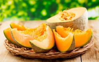 Дыня это ягода или фрукт — описание и особенности плода
