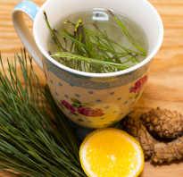 Хвоя сосны в народной медицине: полезные и лечебные свойства, противопоказания, чай и отвары из сосновых иголок