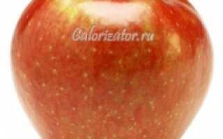 Калорийность сорта яблок Симиренко: количество калорий в 1 штуке и в 100 граммах яблок, полезные свойства и состав