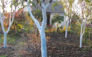 Как укрыть черешню на зиму: особенности ухода осенью и подготовка к зиме, как и когда нужно утеплять, советы садоводов