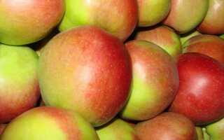 Яблоня сорта Лигол: характеристика, особенности выращивания, отличие от других сортов, фото, отзывы