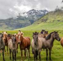 Табун лошадей: сколько голов в стаде, иерархия