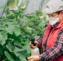 Чем подкормить огурцы во время плодоношения в теплице: лучшие удобрения, народные средства, видео