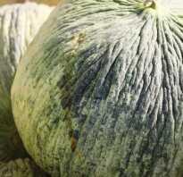 Дыня «Бабушка»: описание, выращивание из семян, полезные свойства, фото