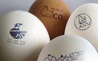 Сколько граммов весит куриное яйцо: без скорлупы, сырое, варёное вкрутую и всмятку, вес желтка и белка, значение по категориям