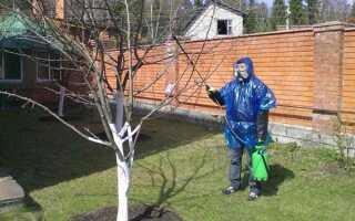 Болезни абрикосовых деревьев: виды, причины появления, методы лечения, препараты, профилактика заболеваний, фото