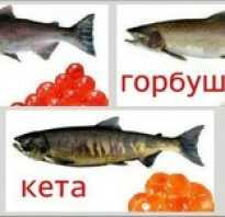 Что вкуснее кета или кижуч, что лучше и как отличить, какая рыба жирнее, чем отличается для засолки