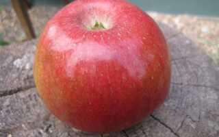 Яблоня Свит 16: характеристики и описание сорта, особенности посадки и ухода за деревом, фото