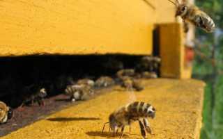 Как пчёлы находят дорогу домой, ориентирование пчёл в пространстве