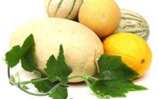 Дыня на голодный желудок: химический состав, польза и вред, особенности употребления продукта