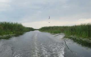 Снасть на сазана в Астрахани: как ловить в Астраханской области в августе, на что ловить в сентябре, где лучше ловить осенью, снасти для ловли