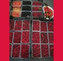 Малина Микер: описание и характеристика сорта, выращивание и уход, фото, отзывы