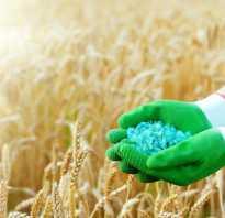 Удобрения: виды и особенности применения органических и минеральных удобрений