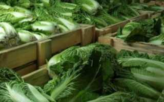 Квашеная пекинская капуста: особенности, лучшие рецепты, способы хранения в домашних условиях
